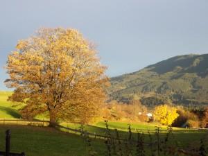 Herbstbild-Eschenberg